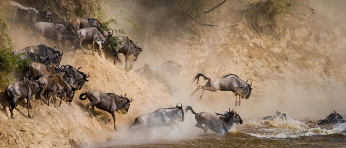 Wildebeest Migration river crossing in Serengeti National Park